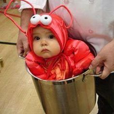 Cute crayfish!