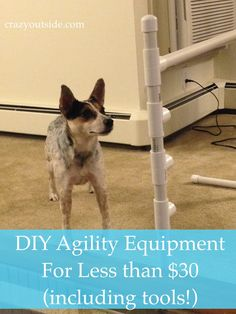 Happy new year, everyone!!! LD (for those new to the blog, my fiance the lovable dork) had the brilliant idea of making agility equipment today for Tasha. Because of her cattle dog high activity le… More