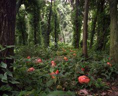 THE GREEN GUERILLA COLLECTION | SPRING 2013  FEATURED ARTIST | Janaina Tschape | Botanica