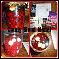 "Make a ""candy blood"" model using red hots, marshmallows, sprinkles, and karo syrup!"