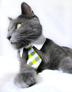 "Sir Arthur loves wearing ties of all kinds. Today, he's going for ""fun boss."""