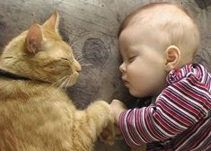 Best Funny cat and kitten, TOP Funniest cats in the world videos Compilation. Funny cats and kittens funniest videos! They make us laugh and happy! Animals For Kids, Cute Baby Animals, Funny Animals, Animals Images, Funniest Animals, Cute Cats, Funny Cats, Cat Fun, Adorable Kittens