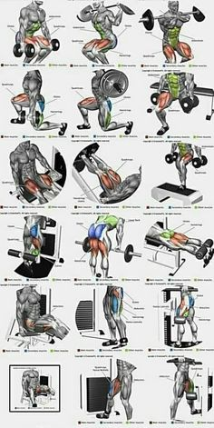 5 Muscle Building Exercises That You Should Do Make Muscle Building . - fitness en oefeningen -Top 5 Muscle Building Exercises That You Should Do Make Muscle Building . - fitness en oefeningen - Peito Chest workout at home for strength and mass Workout Names, Gym Workout Chart, Workout Routine For Men, Workout Programs, Gym Programs, Fitness Programs, Workout Tips, Workout Challenge, Kettlebell Training
