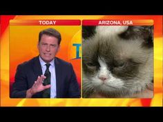 Grumpy Cat VS Karl Stefanovic - Guy completely loses it in a giggle fit over grumpy cat. Les Miserables, Grumpy Cat Breed, Grumpy Kitty, Funny Cats, Funny Animals, Youtube Animals, Bad Cats, Bad Kitty, Anatole France