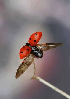 ladybug and the fly