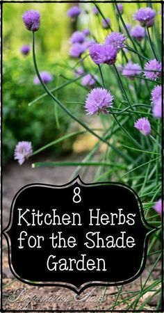 8 Kitchen Herbs for the Shade Garden- Because not every garden is full sun!