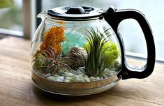 terrarium with teapot - Terrarium Diy, Terrariums, Aquascaping, Summer Arts And Crafts, Dragon Fly Craft, Small Space Interior Design, Succulents Diy, Succulent Ideas, Easy Diy Crafts