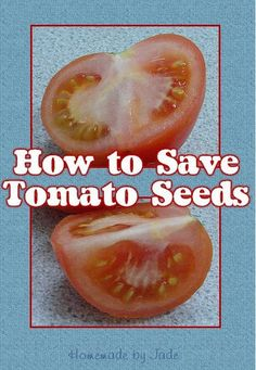 Gathering your own seeds is a great way to save money, and to have fresh, viable seeds to plant every year in your garden. Collecting tomato seeds is really easy, this post will tell you how! Liquid Fertilizer, Organic Fertilizer, Container Gardening, Gardening Tips, Vegetable Gardening, Grow Your Own Food, Food To Make, Starting Plants From Seeds, Verticle Garden