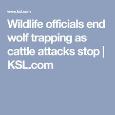 Wildlife officials end wolf trapping as cattle attacks stop | KSL.com