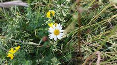 Bloemen en grassen in de berm- Nederland