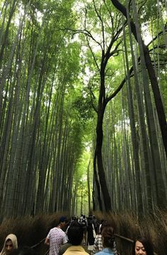 Kyoto's Arashiyama Bamboo Forest is located in western part of Kyoto near the base of the Arashiyama Mountains. How to get to Arashiyama Bamboo Forest Kyoto Japan, Backpacking, Bamboo, Pictures, Photos, Backpacker, Grimm, Travel Backpack