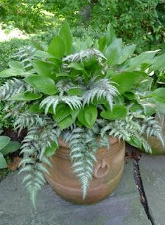 Painted fern with hosta-I would have never thought of this for a container. So pretty and virtually maintenance free.