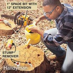 How to Remove a Tree Stump Painlessly