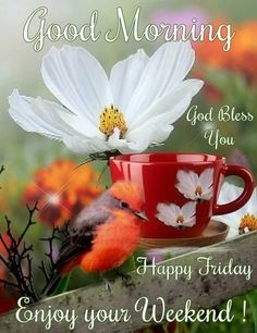 Good Morning Happy Sunday Images, Quotes, GIF, Blessings Weekend - Have a Blessed Sunday to all! Sunday Morning Images, Happy Sunday Images, Good Morning Happy Friday, Weekend Images, Good Morning My Friend, Happy Sunday Quotes, Good Morning Picture, Happy Weekend, Good Morning Quotes