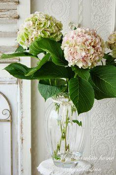 My Little White Home by Nadine: Hortensia's Beautiful Flower Arrangements, Love Flowers, Fresh Flowers, Floral Arrangements, Beautiful Flowers, Hortensia Hydrangea, Hydrangea Flower, My Flower, Little White House