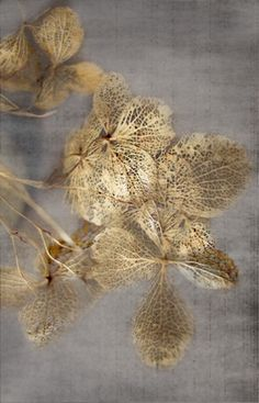 grey and gold Deco Nature, Leaf Art, Textures Patterns, Color Inspiration, Sculpture, Floral, Artwork, Prints, Design