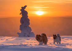 """""""If you need info about Lapland Finland, don't hesitate to ask. I'm living at Äkäslompolo. It's located at Western Finnish Lapland near Swedish border about 150 north from Polar Circle. I work as a nature and travel photographer. Types Of Humans, Lapland Finland, Lappland, Midnight Sun, Travel Photographer, Winter White, Where To Go, Winter Wonderland, Wilderness"""