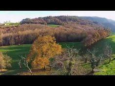 Llega el invierno (the forest is prepared for the winter) | videos desde otro punto de vista