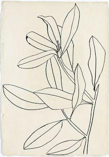 line floral drawings by ellsworth kelly