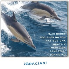 """""""Las redes sociales no son más que una grata y merecida compañía. ¡Gracias!"""". (David F.) http://alejandrodavidfo.blogspot.com"""