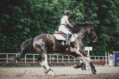 How to Create The Best Riding Schedule + FREE WORKSHEET - The Rider's Reins