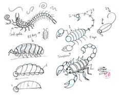 Draw More Insects by ~Diana-Huang on deviantART (Great scorpion shape)