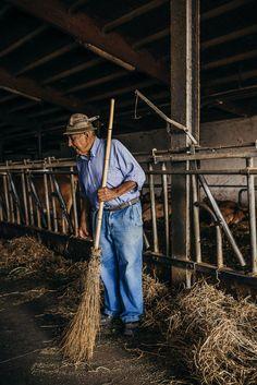 Die reiche Milch der roten Kühe (Vacche Rosse). Parmigiano Reggiano von Grana d'Oro aus der Emilia Romagna.