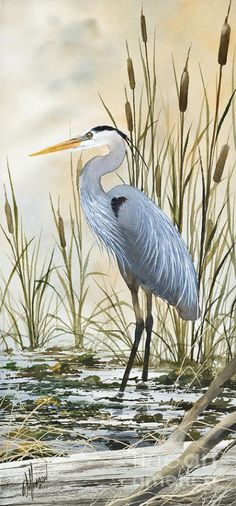 Heron And Cattails Painting by