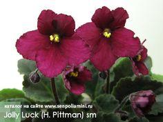 Jolly Luck (H. Pittman)