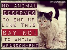 No animal deserves to end up like this! Share & help us spread awareness!