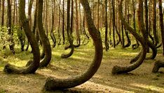 What is in Hoia-Baciu Forest? That's the question that nobody can seem to answer.