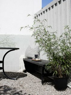 Who says you need a lot of plants to enjoy the outdoors? Potted bamboo on gravel. Simple bench.