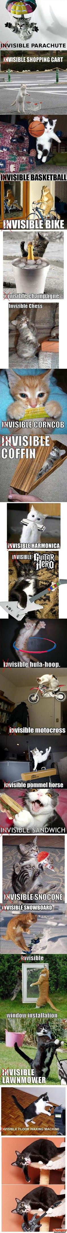visible lolcats