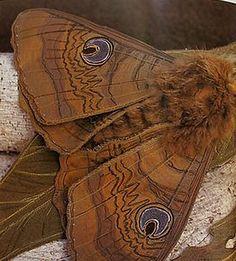 The Art of Annemieke Mein: Wildlife Artist in Textiles Fabric Butterfly, Butterfly Art, Butterflies, Fabric Art, Fabric Crafts, Textiles, Thread Painting, Textile Artists, Soft Sculpture