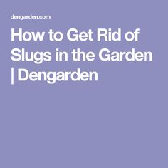 How to Get Rid of Slugs in the Garden | Dengarden