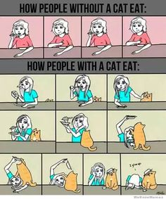 Crazy Cat Lady diet