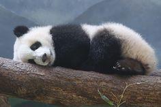 Mei Huan by smileybears, via Flickr
