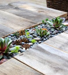 succulents in your deck