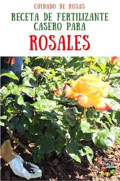 Herb Garden, Garden Plants, Plantar Rosales, Garden Online, Growing Seeds, Plant Nursery, Dream Garden, My Flower, Pretty Flowers