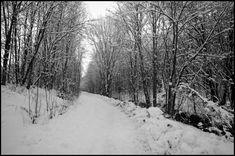 Winter walk – Monochromia