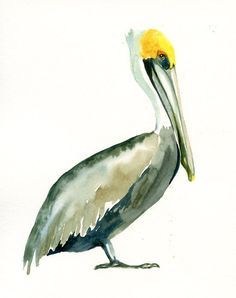 BROWN PELICAN 5x7 Print -Art Print-Bird Watercolor Print-Giclee Print-. $8.00, via Etsy.