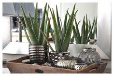 Quand les plantes décorent et soignent à la fois  #lifestyle #deco #decoration #decorationinterieur #interieur #plante #aloevera #decointerieur #blogger #bloglifestyle #vases #room #inspirations http://www.shetalksabout.com/laloe-vera-la-plante-dinterieur-a-vertu-medicinale/