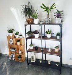 Green shelves.