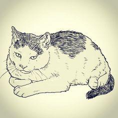 #dailydrawing #drawing #catdrawing #cat #dailydrawings #drawings #catdrawings #cats #냥그림 #냥스타그램 #캣스타그램 #catstagram #neko #고양이 #猫 #ねこ #gato #고양이그림 #instacat #하루한장#취미로고양이그리는아줌마