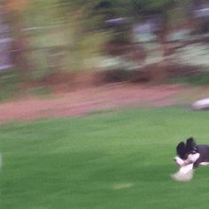 21 Best GIFs Of All Time Of The Week #130 from best GOAT and Best of the Web