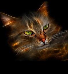fancy fractalcat