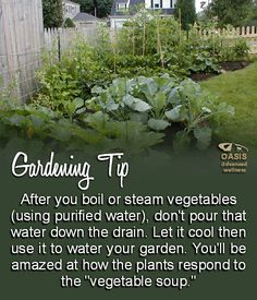 Gardening Tip: If you are planting a backyard or container garden, recycle the (purified) water used for cooking or steaming veggies by using it to water your garden. Be sure to allow the water to cool. #gardengrowingtips