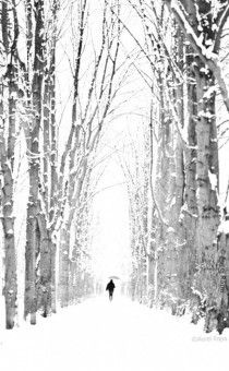 A walk in the woods Aurel Rapa Found on photorator.com Leading Line, Vertical Line