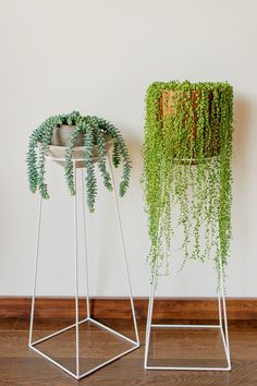 Burros Tail & String of Pearls on www.bluecaribou.ca stands  #donkeytail #burrostail #stringofpearls #plantstand