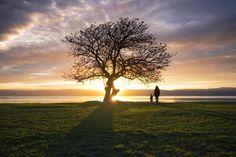 Sunset in Wollongong Australia - golden_an - #nature #travel #landscape